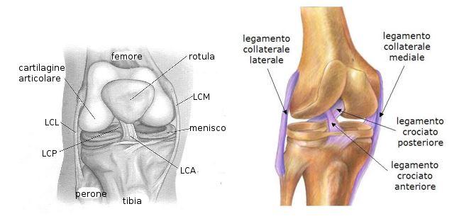 Il ginocchio: biomeccanica dei legamenti collaterali