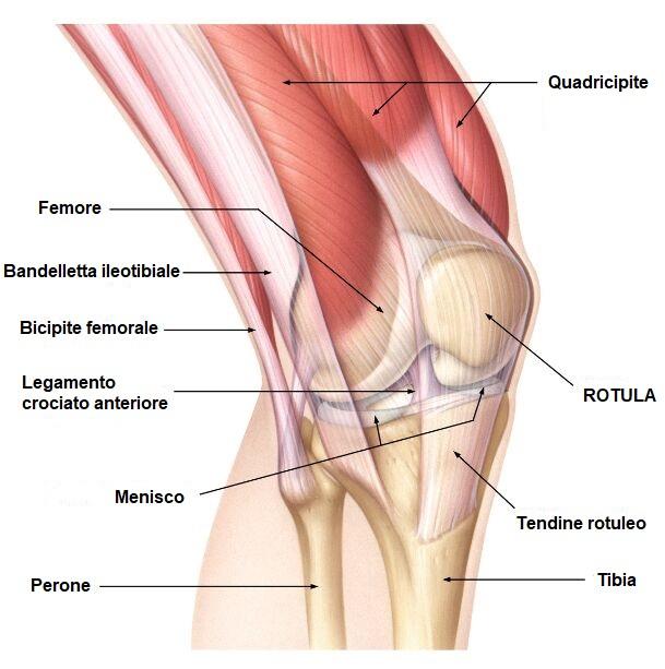 La patella: anatomia, funzioni ed infortuni